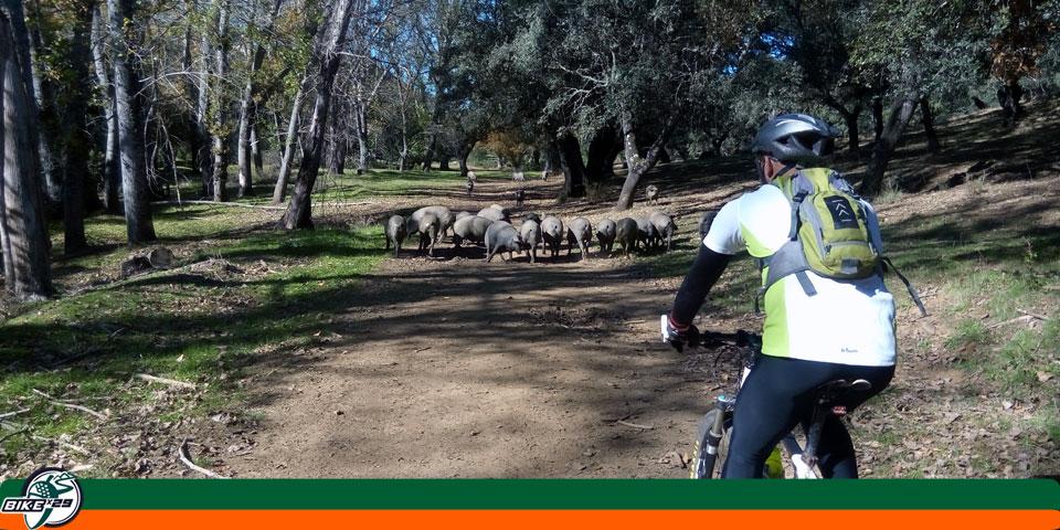 bikex29_ruta15_iniciacion_btt_cicloturismo_puerto_moral-corteconcepcion_odie_orapial_cerdos