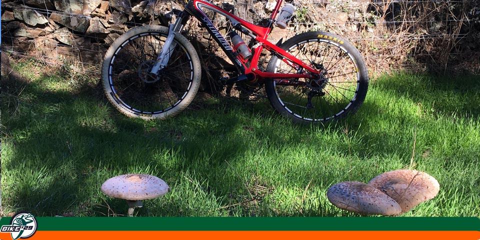 bikex29_ruta19_btt-iniciacion_cicloturismo_gr48_cumbres_de_san_bartolome_cumbres_de_enmedio_setas