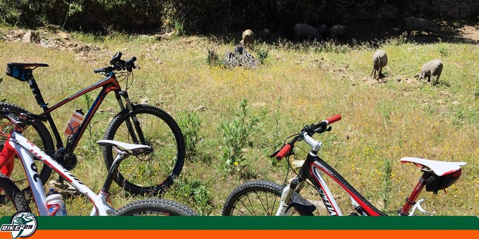 bikex29_ruta_11_cicloturismo_btt_iniciacion_zufre_higuera_carril_blanco_cerdos
